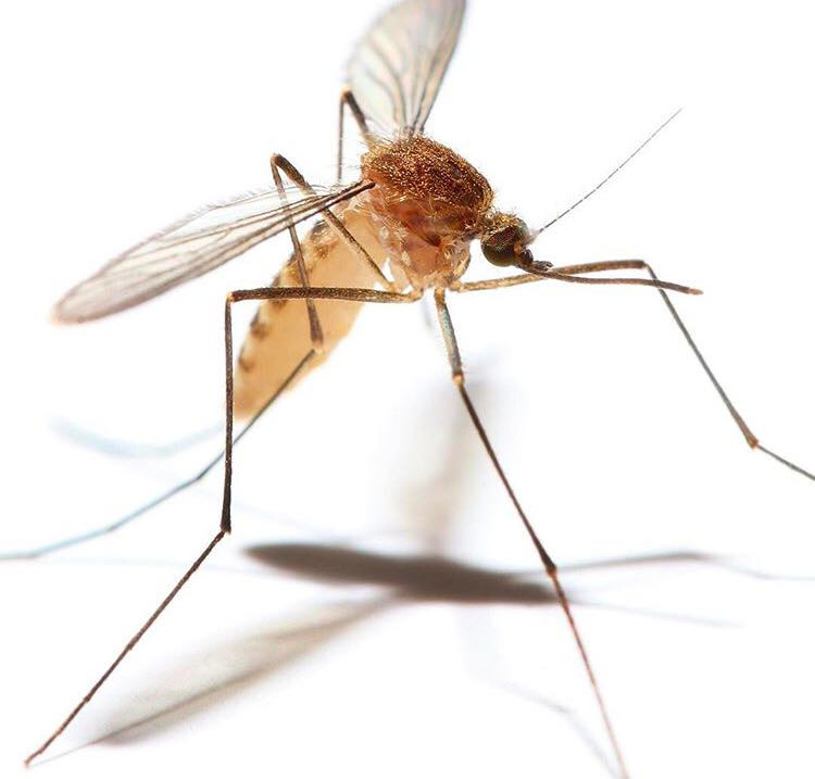 Un om a murit din cauza infecţiei cu virusul West Nile