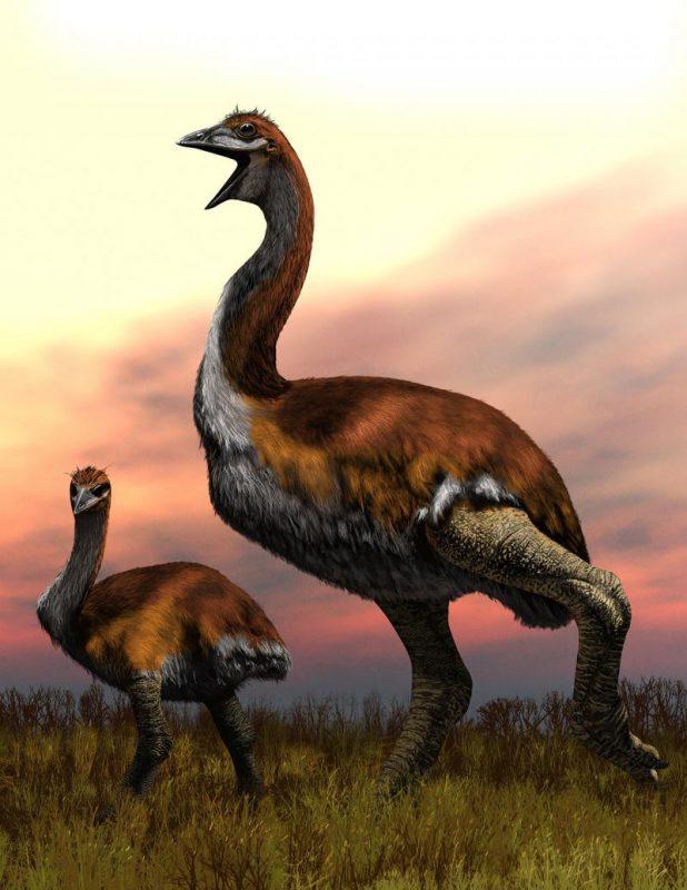 Cea mai mare pasăre care a trăit vreodată pe Terra