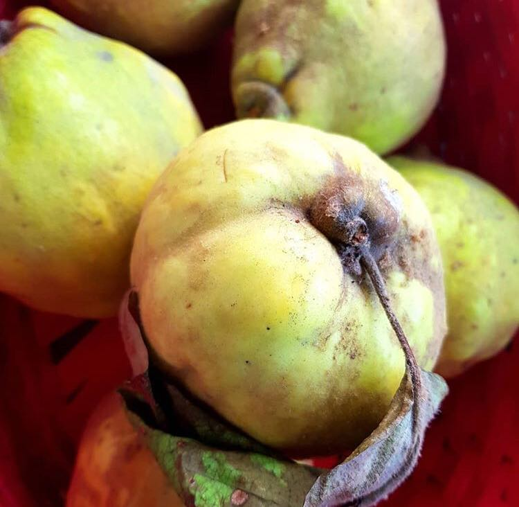 Cum se prepară gutuiata, una dintre cele mai aromate băuturi