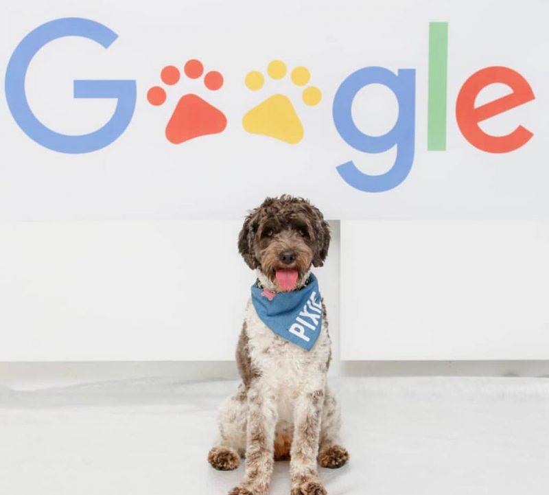 Aplicaţii de Android periculoase, depistate de Google