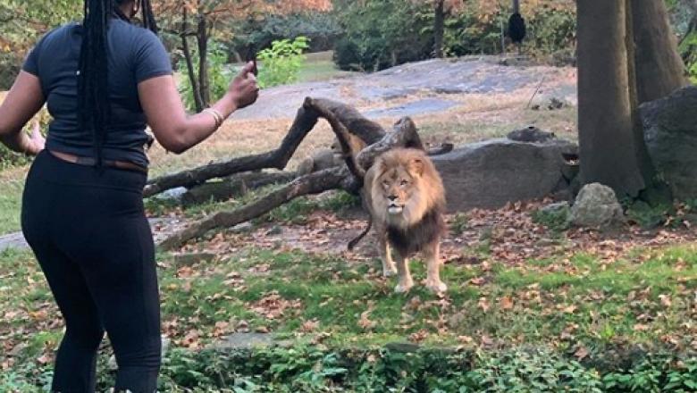 O femeie a sărit în cușca leului, la Zoo.